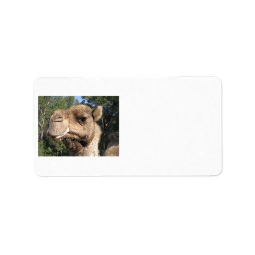 Etiqueta Drooling del camello Etiquetas De Dirección