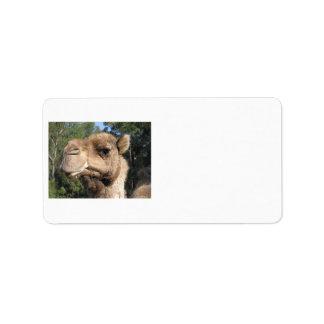 Etiqueta Drooling del camello Etiqueta De Dirección