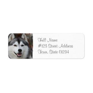 Etiqueta fornida del remite del perro etiqueta de remitente