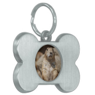 Etiqueta fresca del mascota del perro de las prade placas de nombre de mascota