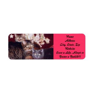 Etiqueta-Personalizable del remite del gatito Etiqueta De Remitente