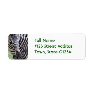Etiqueta rayada del remite de la cebra etiqueta de remitente