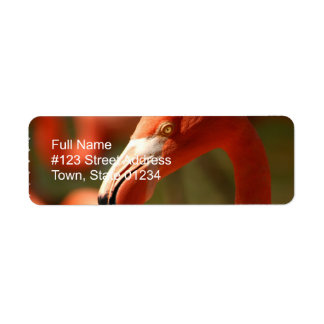 Etiqueta rosada del remite del flamenco etiqueta de remite