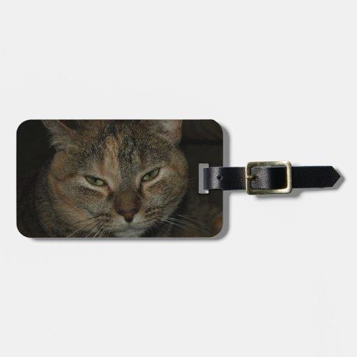 Etiqueta soñolienta del equipaje del gato etiquetas maletas
