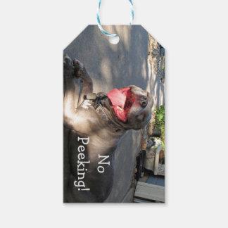 Etiqueta sonriente del regalo de Pitbull Etiquetas Para Regalos