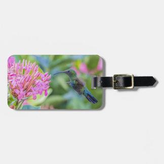 Etiqueta Throated verde del equipaje del colibrí Etiqueta Para Equipaje