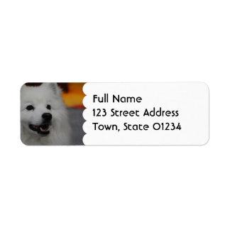 Etiquetas de correo americanas del perro esquimal etiqueta de remite