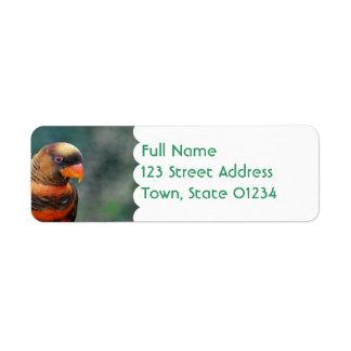Etiquetas de correo anaranjadas de Lorikeet Etiqueta De Remite