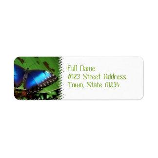 Etiquetas de correo azules de la mariposa del ala etiquetas de remite