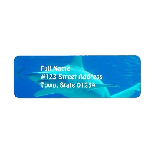 Etiquetas de correo de la natación del tiburón etiqueta de remite