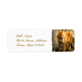 Etiquetas de correo de los zorros etiqueta de remite