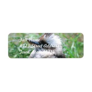 Etiquetas de correo de risa de Kookaburra Etiquetas De Remite