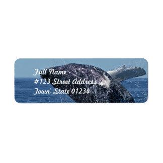 Etiquetas de correo de salto de la ballena etiqueta de remite