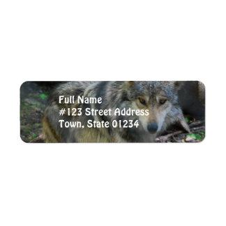 Etiquetas de correo de vagabundeo del lobo etiqueta de remite