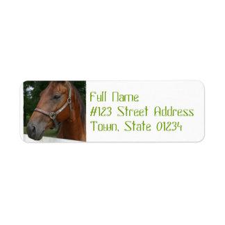 Etiquetas de correo del caballo de la castaña dulc etiquetas de remite