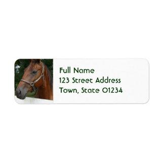 Etiquetas de correo del caballo de la castaña dulc etiqueta de remite
