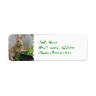 Etiquetas de correo del conejo de conejo de rabo b etiqueta de remite