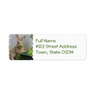 Etiquetas de correo del conejo de conejo de rabo b etiquetas de remite
