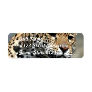 Etiquetas de correo del gato de leopardo etiqueta de remitente