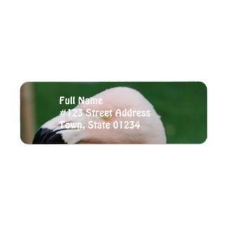 Etiquetas de correo del pájaro del flamenco etiqueta de remite