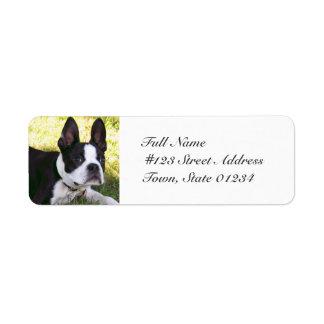 Etiquetas de correo del perrito de Boston Terrier Etiquetas De Remite