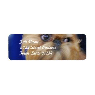Etiquetas de correo del perro de Bruselas Griffon Etiqueta De Remite