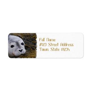 Etiquetas de correo dulces de la cría de foca etiqueta de remitente