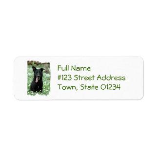 Etiquetas de correo negras del pastor etiquetas de remite