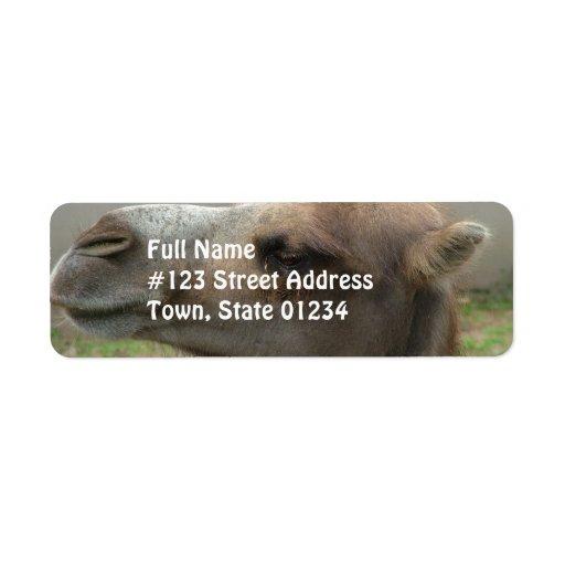 Etiquetas de correo principales del camello etiquetas de remite