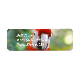 Etiquetas de correo rojas brillantes del loro etiqueta de remite