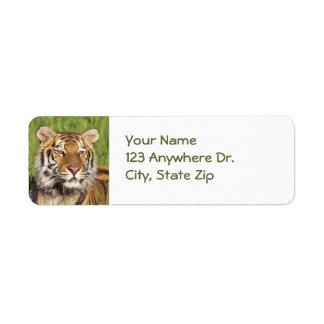 Etiquetas de devolución del tigre etiqueta de remitente