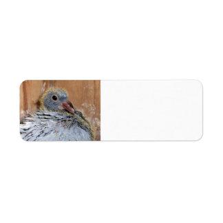Etiquetas de dirección adaptables de la paloma del