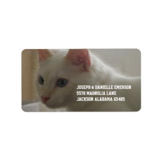 Etiquetas de dirección blancas hermosas del gato