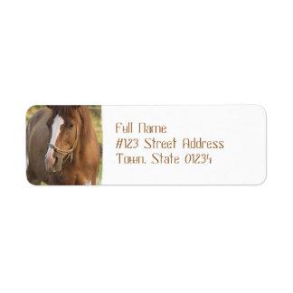 Etiquetas de dirección cuartas del caballo de la c