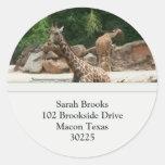 Etiquetas de dirección de las jirafas pegatinas redondas