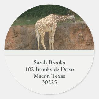 Etiquetas de dirección de las jirafas pegatina redonda