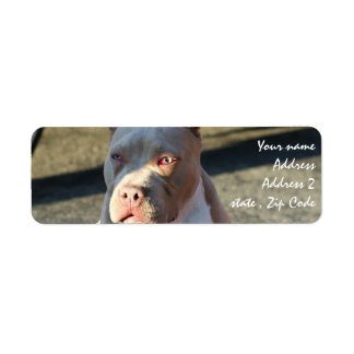 Etiquetas de dirección de Staffordshire Terrier am
