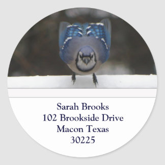 Etiquetas de dirección del arrendajo azul pegatina redonda