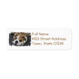 Etiquetas de dirección del dogo el dormir
