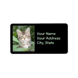 Etiquetas de dirección del gatito del Tabby