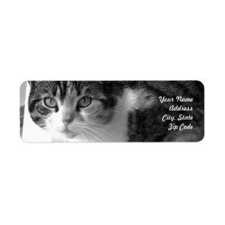 Etiquetas de dirección del gato de Tabby