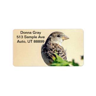 Etiquetas de dirección deliciosas del pájaro