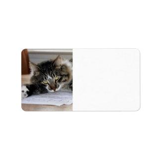 Etiquetas de dirección musicales del gato