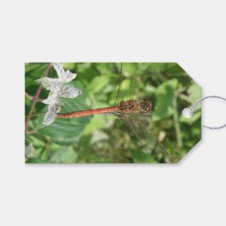 Etiquetas de encargo del regalo de la libélula etiquetas para regalos