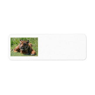 etiquetas del cachorro de tigre etiqueta de remitente