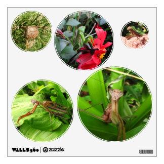Etiquetas del ~ de la mantis religiosa