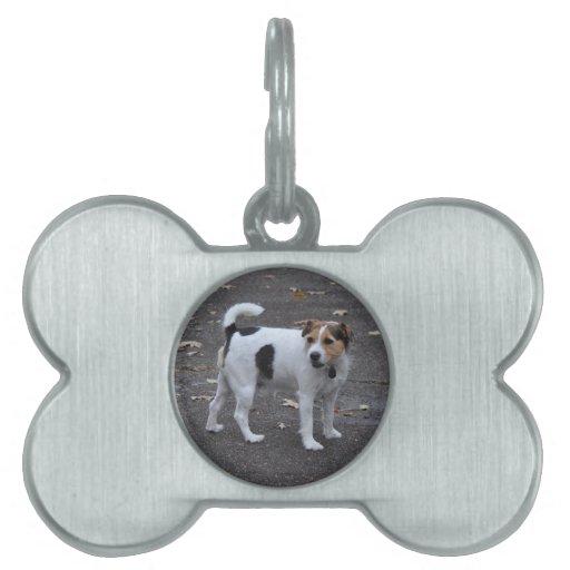 Etiquetas del mascota del hueso de perro placas de mascota