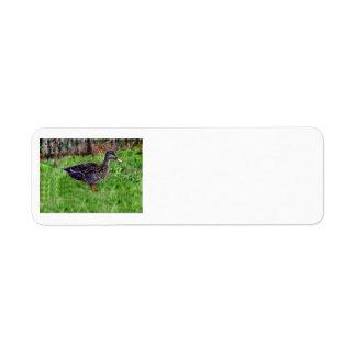 Etiquetas del pato etiqueta de remite