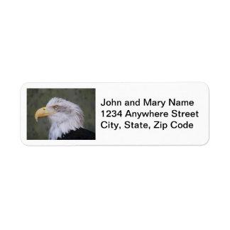 Etiquetas del remite de la foto de Eagle calvo Etiqueta De Remite