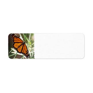 Etiquetas del remite de la mariposa de monarca etiquetas de remite